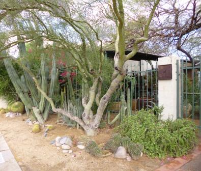 Scottsdale garden