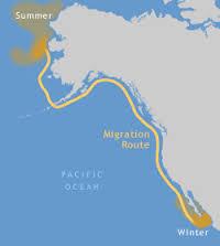whalemigration